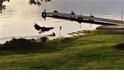 老鷹將小鹿壓制於水中「活活淹死」