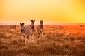 那裡,是Safari的天堂(Sponsored )