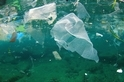 Parley的海洋政策