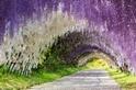探訪紫色夢幻秘境