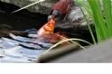 好心紅雀竟然在餵魚?!