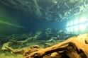 日本北陸秘境 埋沒千年的魚津巨大杉林 (Sponsored)