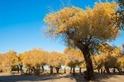 絲綢之路最美的季節