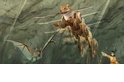 《軒轅劍外傳─蒼之濤》木甲術與現代仿生學的異曲同工之妙