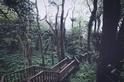 夏季森林正茂盛,鳳凰秘境的木屋小旅行(Sponsored)