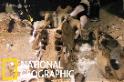 水底洞穴內的巨型地懶遺骸
