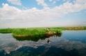 體驗鹽城清新雋永的自然美景