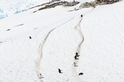 從企鵝公路到賭命追逐:南極動物生死鬥