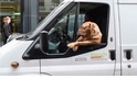 《街拍的52項任務》 41-「狗」生百態