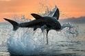飛躍吧!鯊魚