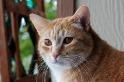 貓也知道自己的名字,但反應為何還是無法跟狗比擬?