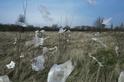 塑膠微粒正在從天而降