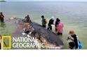 死亡抹香鯨沖上岸,腹內有6公斤塑膠垃圾