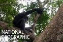 首見!黑猩猩砸破龜殼吃龜肉