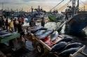 消失中的南海漁場