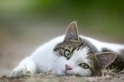 為什麼貓咪這麼討厭被摸肚子?答案在這!