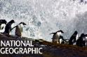 名符其實的「跳岩企鵝」