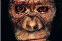 讓黑猩猩遠離伊波拉