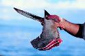 魚翅需求下降中