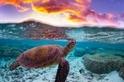 海龜與夕陽