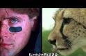 101動物教室:你所不知道的獵豹
