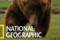 「灰熊厲害啊!」看灰熊追上一頭加拿大馬鹿