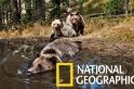 在「熊熊浴缸」獨家直擊熊的私生活!