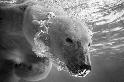 吐泡泡的熊