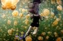 透亮黃金:水母湖