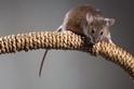人鼠之間15000年