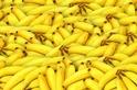 香蕉可能要滅絕了,但蕉農們卻玩起了手機?