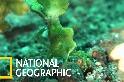 這隻螃蟹戴著一頂又高又綠的帽子!