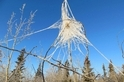 育空,結霜的蜘蛛網