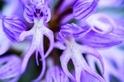 蘭花的神話傳說與民俗療法