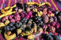 海拔4000公尺的馬鈴薯博物館  暖化未來養活世界人口的希望