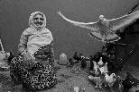 愛鳥的奶奶