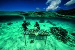 復育珊瑚礁