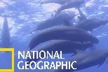 在墨西哥外海與偽虎鯨共泳