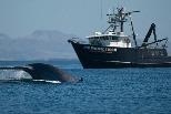 封城使海洋哺乳動物受益? 科學家趁疫情研究「更安靜」的海洋