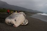 除了對藍鯨說「人類對不起你」之外,我們還能做什麼嗎?