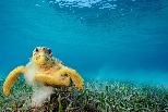 海龜殼上能乘載超過10萬隻搭便車的小生物