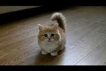 人與貓如何逐漸愛上彼此