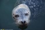 海豹的生活