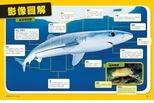 鯊魚感官探秘