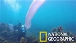 這條8公尺長的半透明生物究竟是什麼東西?