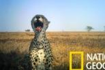 來自塞倫蓋提的動物「自拍照」
