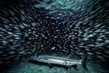 梭子魚自助餐