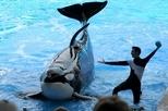 為什麼虎鯨無法在圈養環境下健康長大?