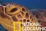 看看海龜殼上有誰在搭便車呢?