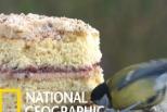 「從筷子變湯匙?」這隻吃蛋糕的大山雀好像長得不太一樣!